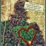 Zahrada v srdci...