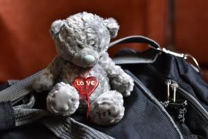 WDSC_0001-Teddy
